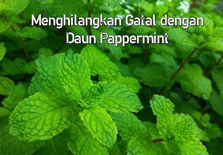 Menghilangkan Gatal dengan Daun Pappermint