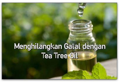 Menghilangkan Gatal dengan Tea Tree Oil