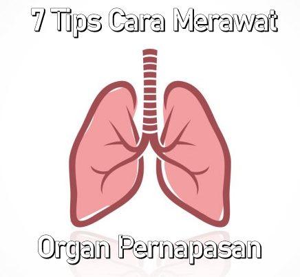 Cara Merawat Organ Pernapasan